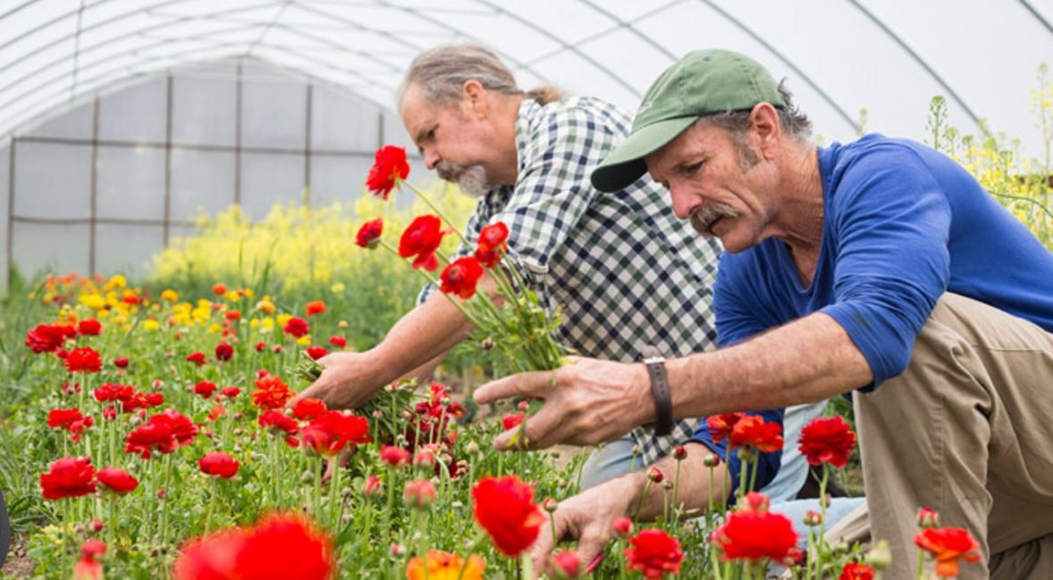 Mark Cain (right) and Michael Crane gather flowers to sell at nearby farmers market. Photograph by Beth Hall, Northwest Arkansas Times.